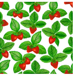 watercolor strawberry with green leaves on white vector image vector image