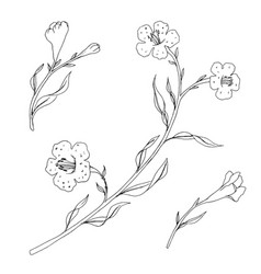 branch with leaves and flowers vector image