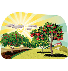 orchard with apple trees vector image