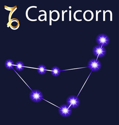 Constellation capricorn with stars in night vector