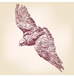 Eagle hand drawn llustration realistic sket vector image