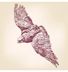 Eagle hand drawn llustration realistic sket vector image vector image