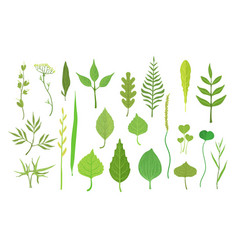 Fresh green leaves from trees shrubs and grass vector