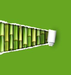 Green bamboo grove with ripped paper frame vector