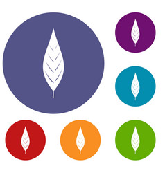 Leaf of willow icons set vector