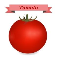 realistic tomato vector image vector image