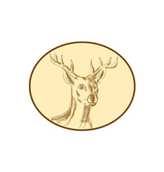 Red Stag Deer Head Circle Etching vector