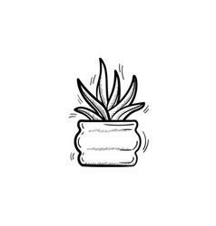 sansevieria trifasciata hand drawn sketch icon vector image
