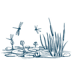 water lily and reeds on pond vector image