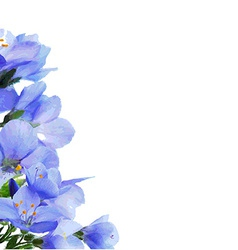 Blue Flowers Border vector