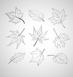 Leaves outline vector image