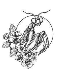 Mantis insect engraving vector