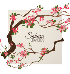 realistic sakura japan cherry branch with blooming vector image vector image