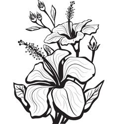 sketch of hibiscus flowers vector image