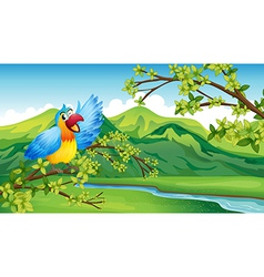 A bird on a branch of a tree vector image