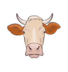 cow head on white background vector image