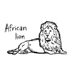 African lion lying - sketch hand vector