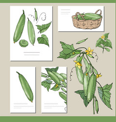 Cucumber set with visitcards and greeting vector
