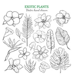 hand drawn exotic plants set vector image