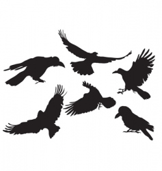 crow silhouette vector image vector image