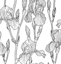Black and white sketch of iris flowers vector