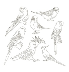 different parrots set vector image