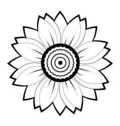 Sunflower flower black and white on white vector