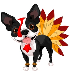 Thanksgiving Boston Terrier vector image
