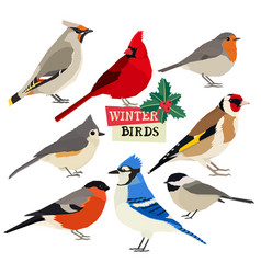 Winter birds isolated objects vector