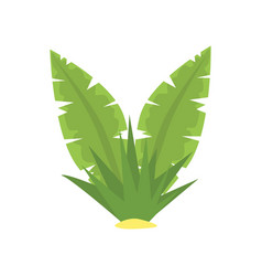 fern green tropical leaves cartoon vector image
