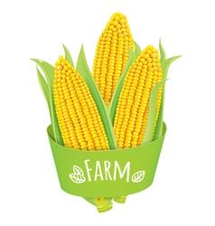 Farm corn vector image vector image