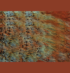 bird fur animal background and texture good vector image
