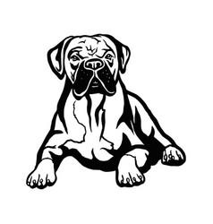 boxer dog - isolated on white vector image