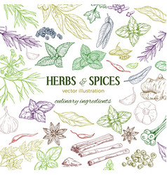 Frame composed of hand drawn herbs and spices vector