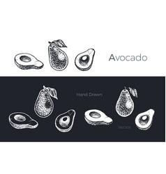hand drawn avocado fruits sketch set vector image