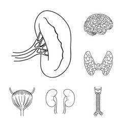 human organs outline icons in set collection for vector image