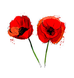 Colored poppy flowers vector