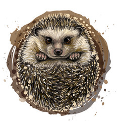 hedgehog artistic drawn color portrait vector image