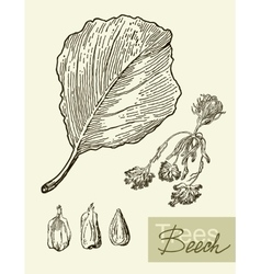 image of leaves flowers and fruits of vector image