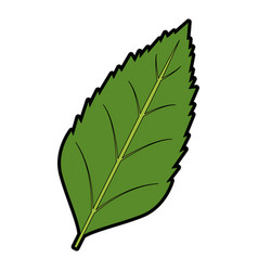 Leave plant natural flora foliage image vector