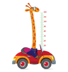 giraffe on car meter wall or height chart vector image vector image