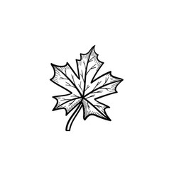 maple leaf hand drawn sketch icon vector image