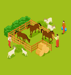 animal farm livestock with horses goats sheeps vector image