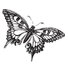 Butterfly vintage vector