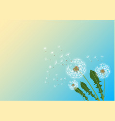 Dandelions with flying fluff vector