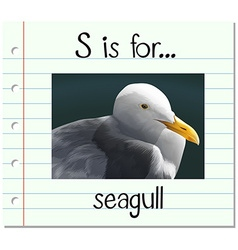 Flashcard alphabet S is for seagull vector image