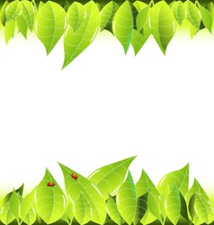 Leaves and ladybugs frame background vector