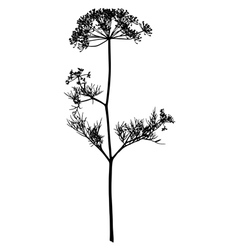 Silhouette of an inflorescence of fennel vector