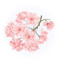 Twig tree sakura blossoms vintage vector