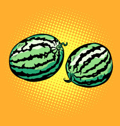 watermelon isolated on a neutral background vector image